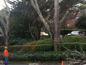 Tree Removal - Southeastern Tree and Debris