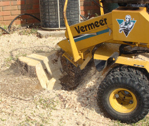 Southeastern Tree and Debris: stump grinding